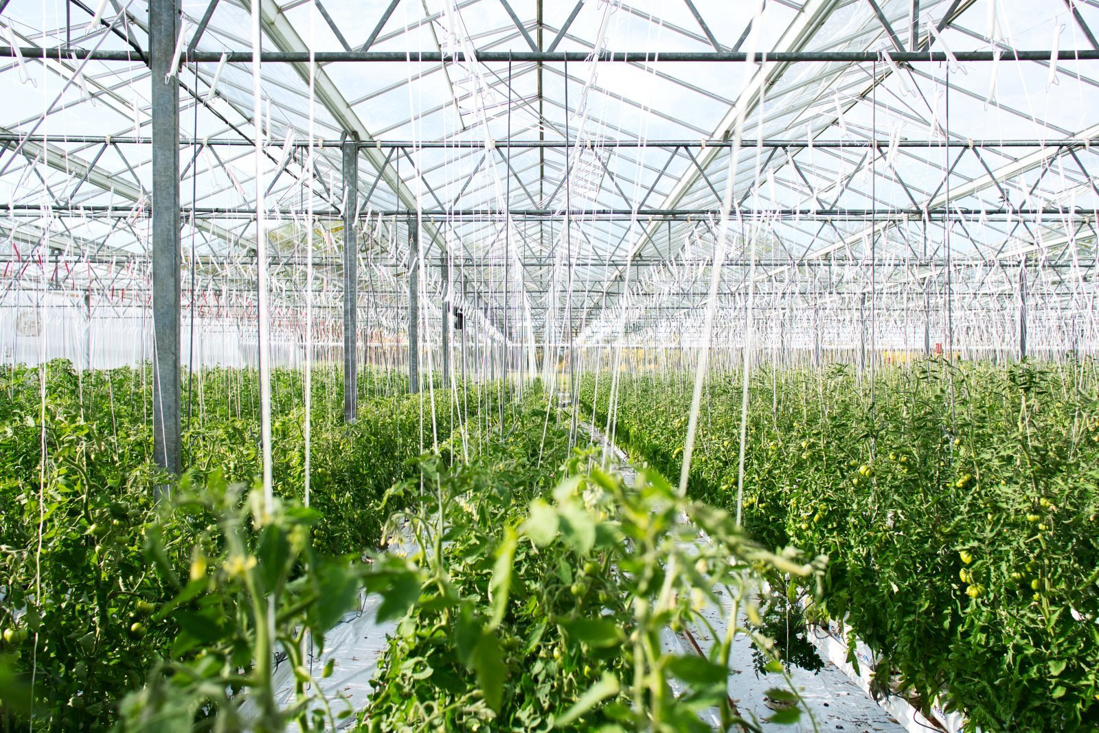 agriculture-technology-private-equity